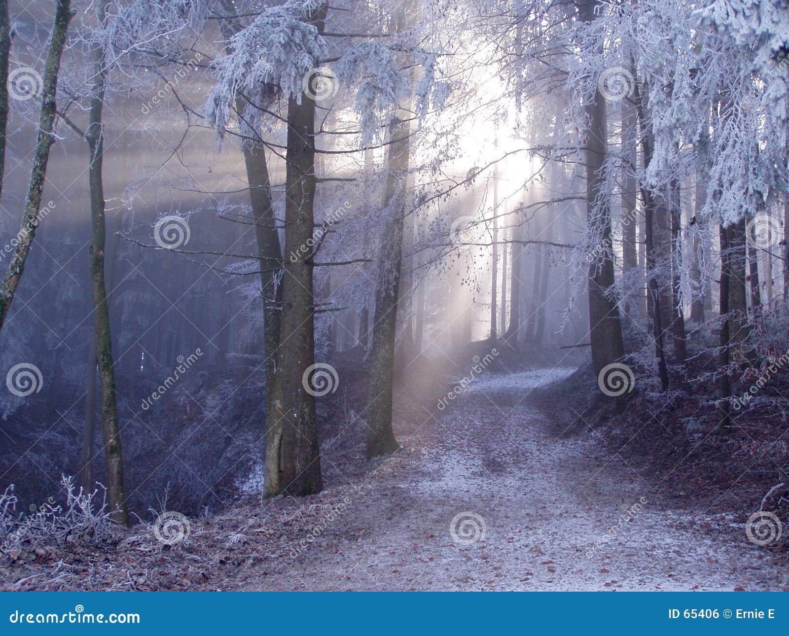 Download Forêt mystique. photo stock. Image du lumière, forrest, matin - 65406