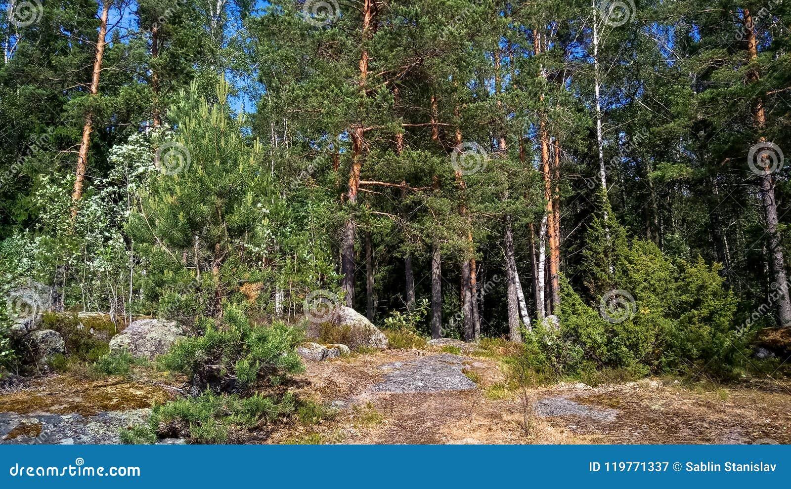 Forêt naturelle avec des rochers de granit Nature du nord, forêt un jour ensoleillé avec des nuages dans le ciel