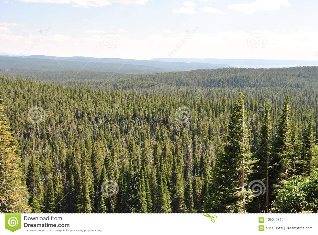 Forêt, parc national de Yellowstone, Wyoming
