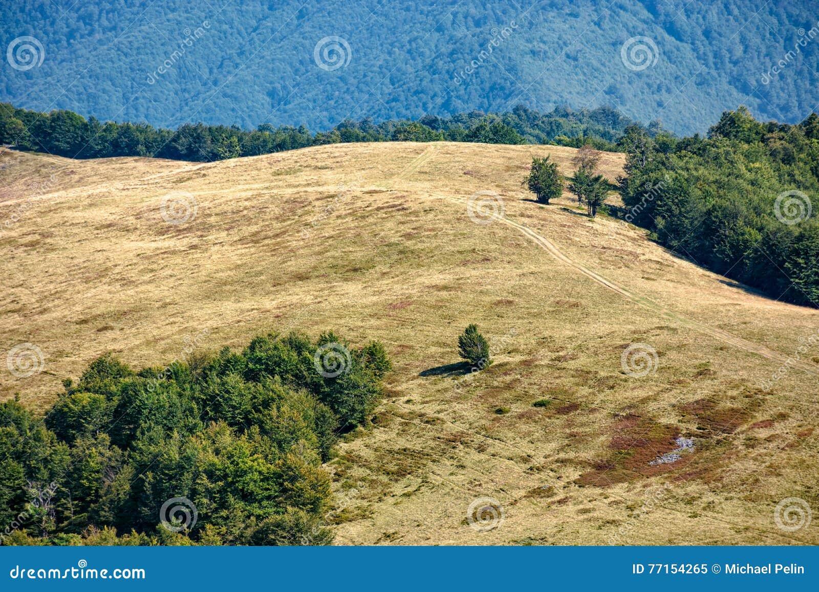 Forêt près de pré sur le flanc de coteau de montagne