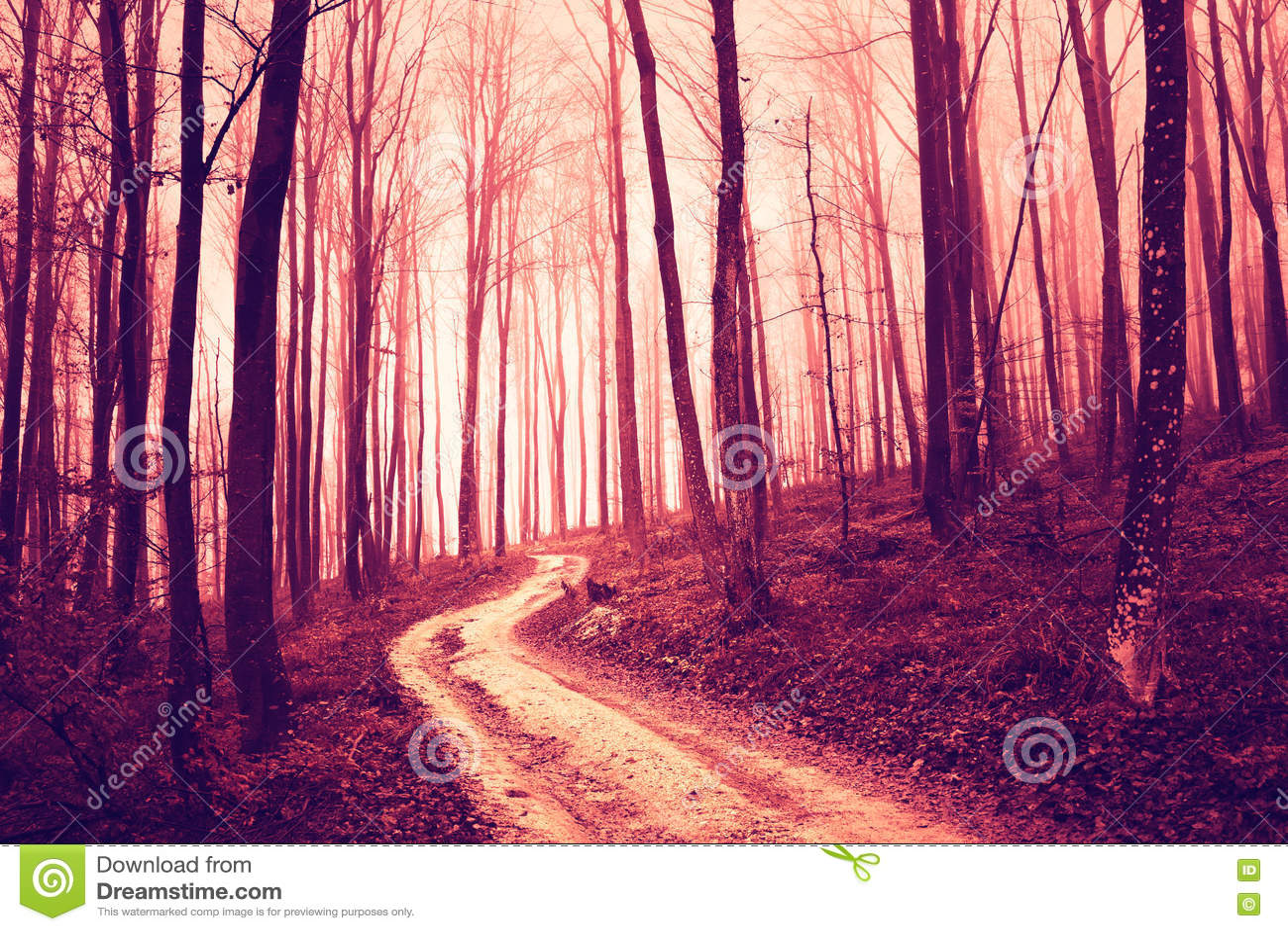 Forêt saturée par rouge rampant avec la route