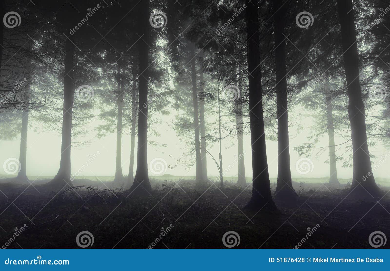 Forêt sombre avec le brouillard