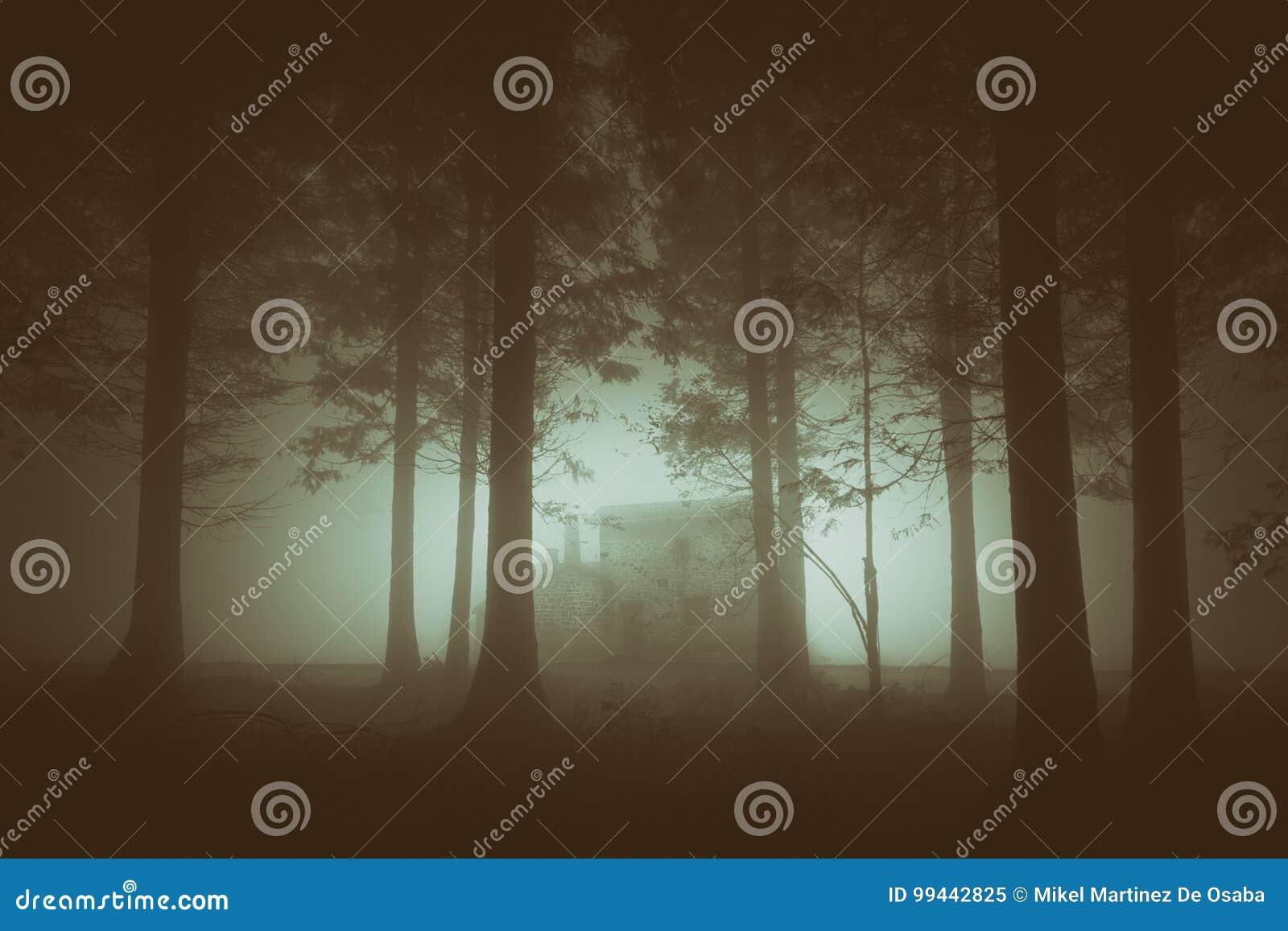 Forêt sombre avec le brouillard et la maison