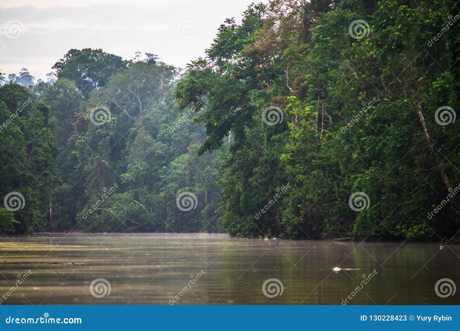 Forêt tropicale le long de la rivière kinabatangan, Sabah, Bornéo Malaysi