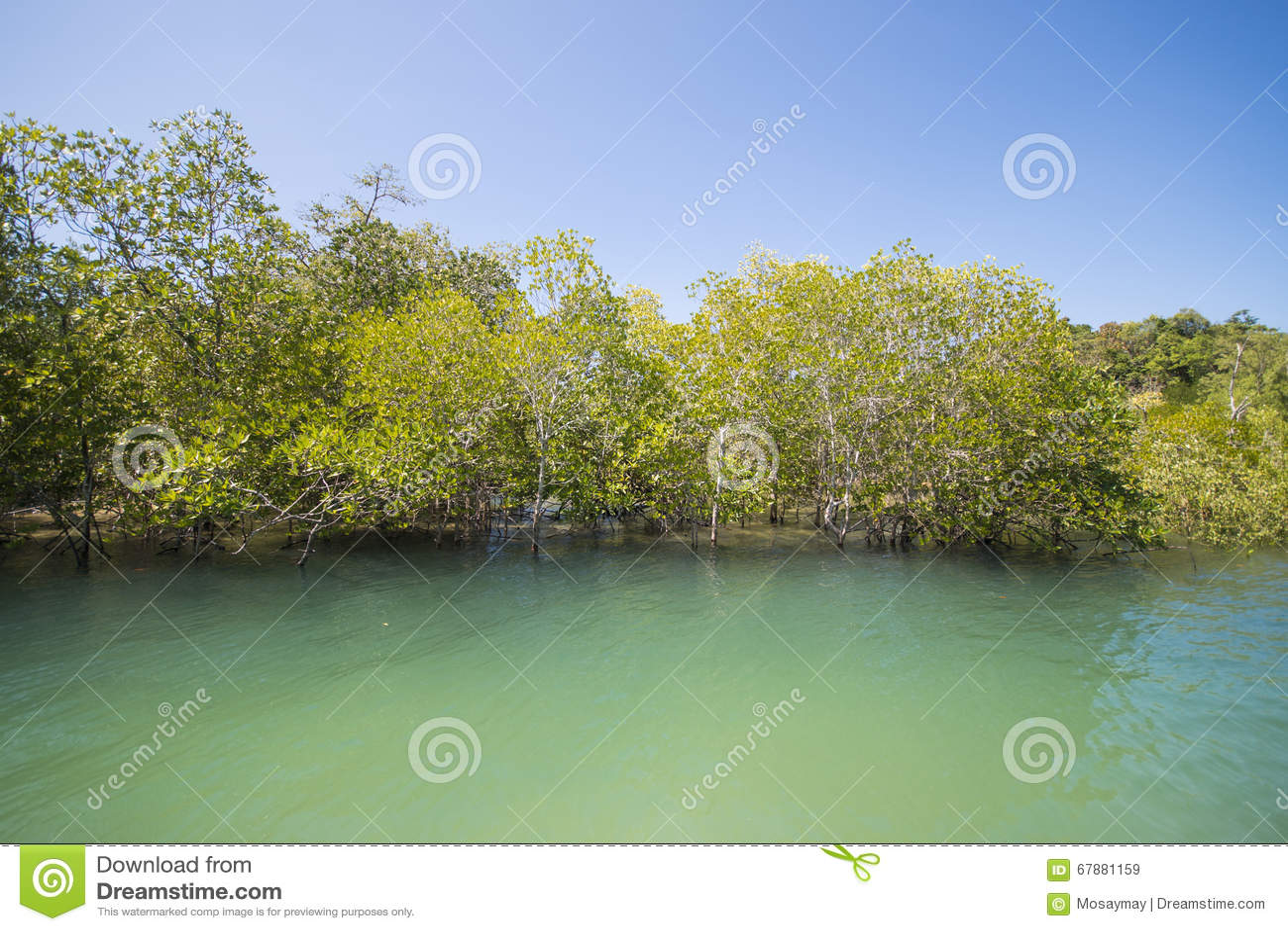 Forêt tropicale tropicale de forêt de palétuvier