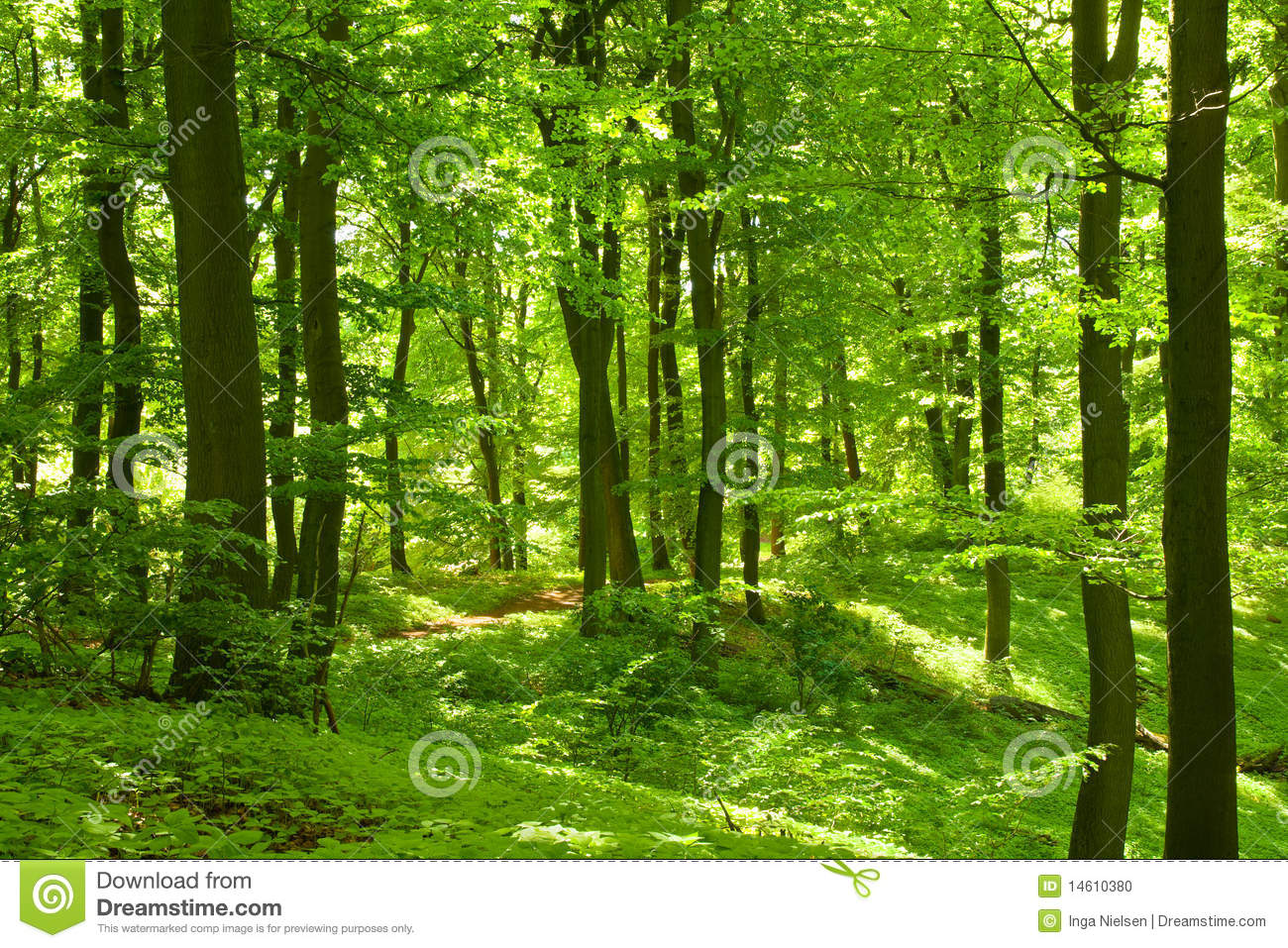 foret verte photo stock image du deciduous horizontal