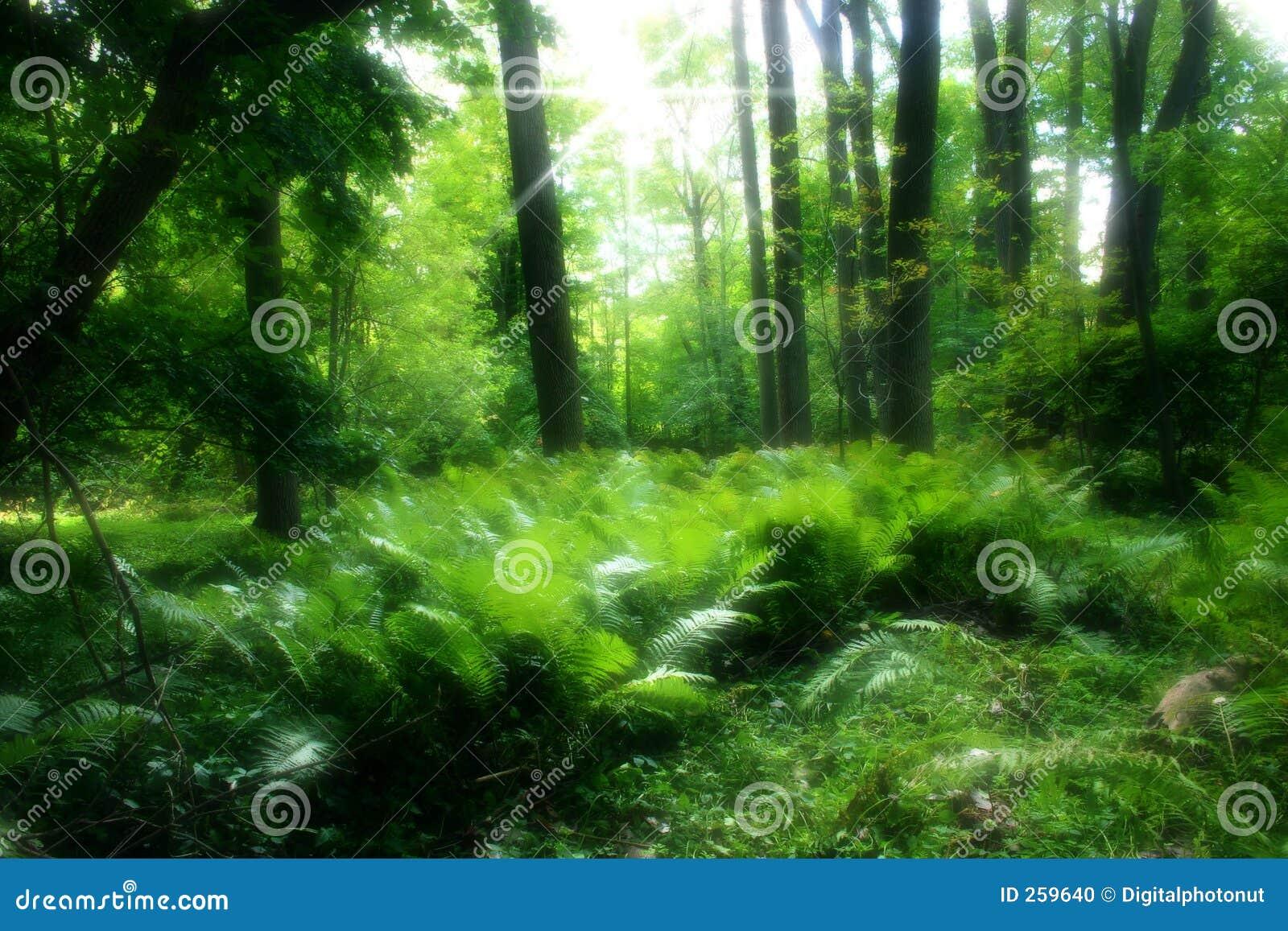 Forêt verte abondante