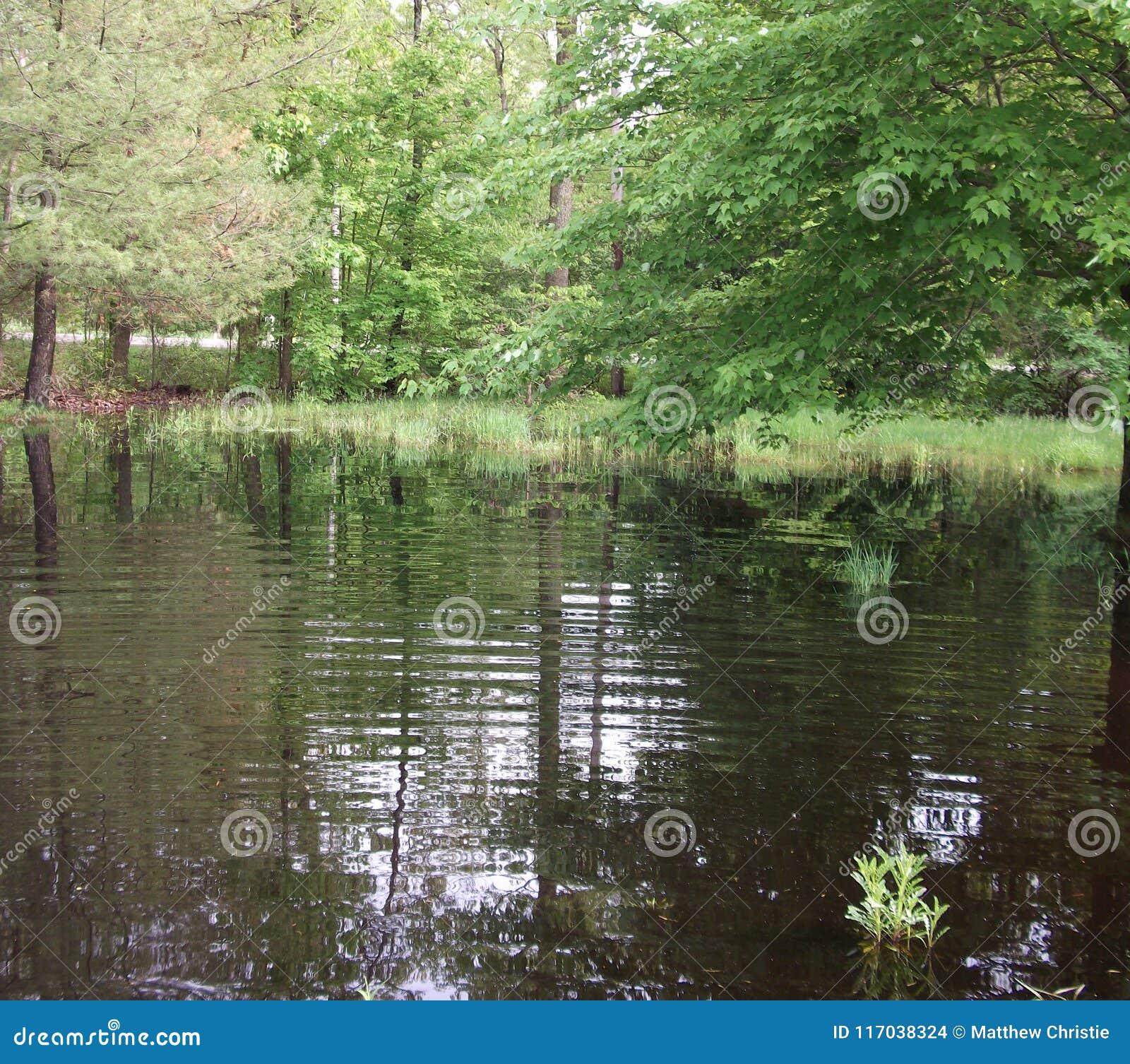 Fora, árvores, água, inundação, grama, jarda, estrada,