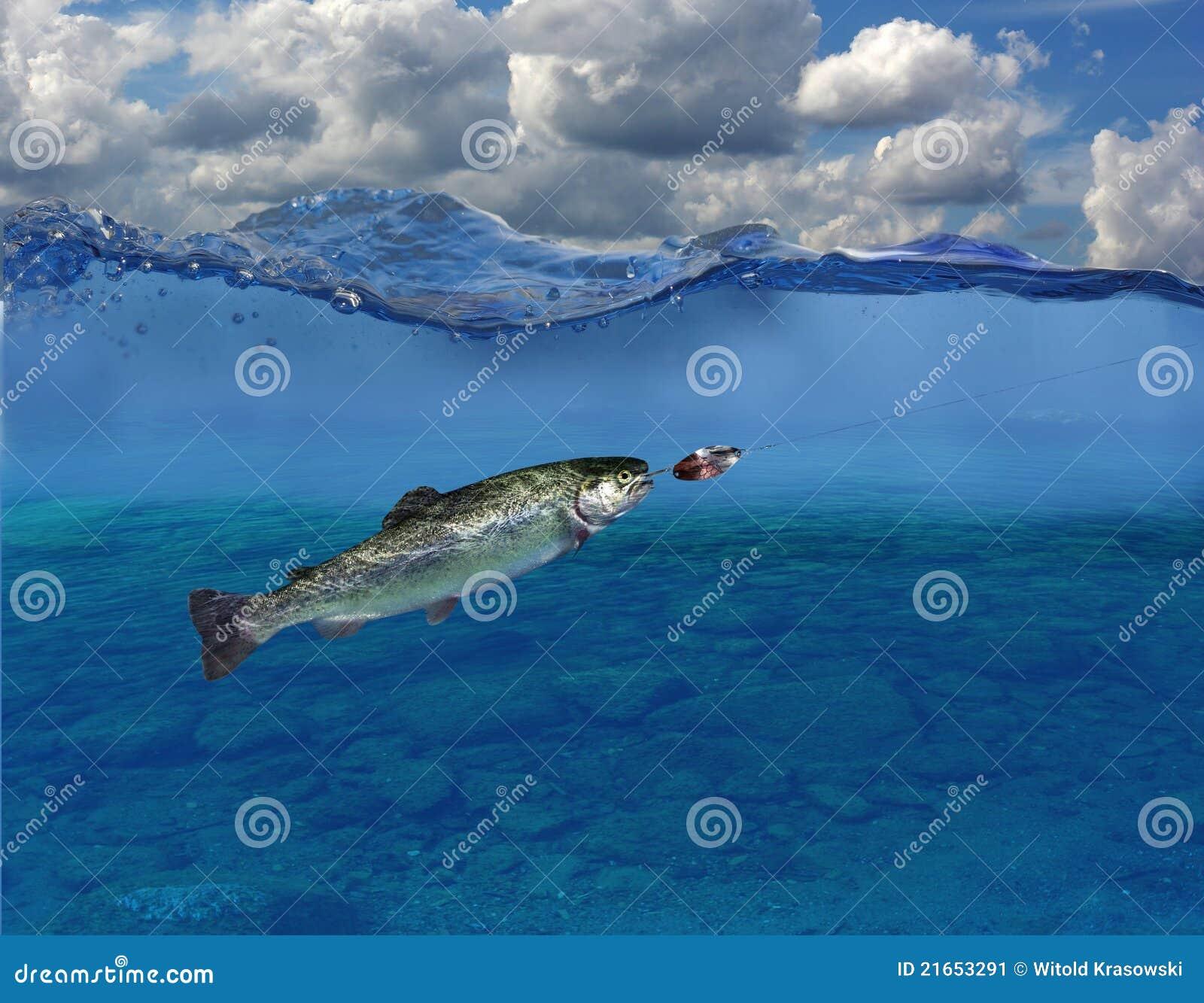 Forel onder water