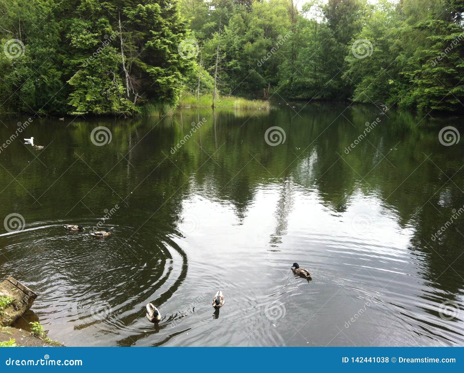 Forest湖