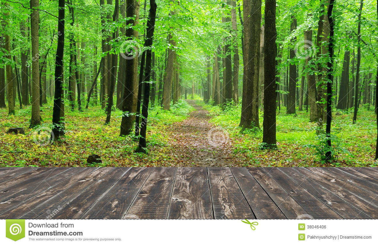 royalty free forest images