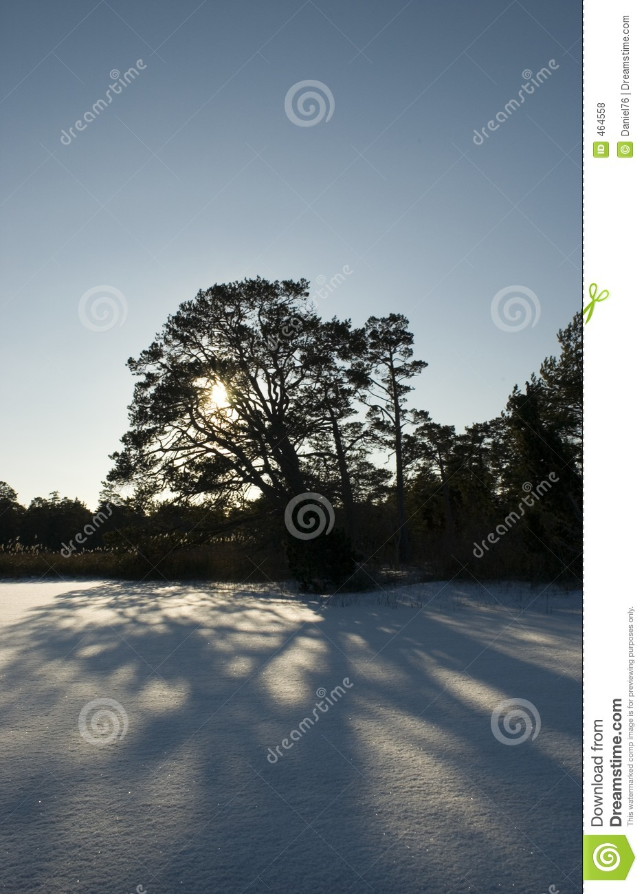 Download Forest stock photo. Image of tree, landscape, forest, nature - 464558