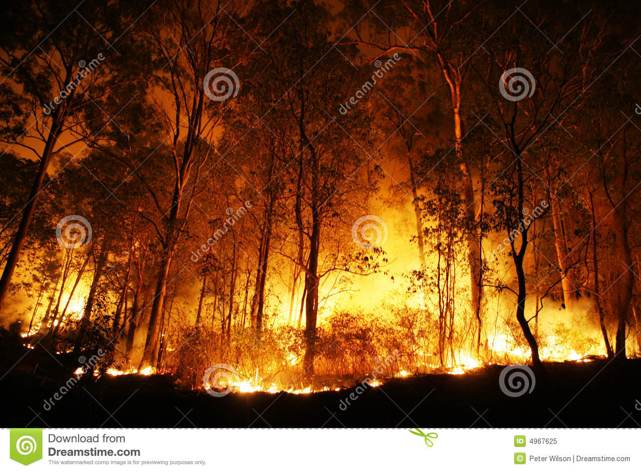 Forest Ablaze at Night