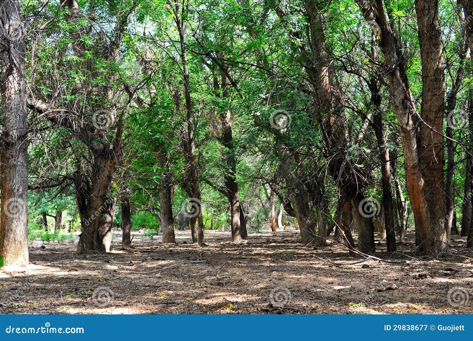 Forest Almaty kazakhstan