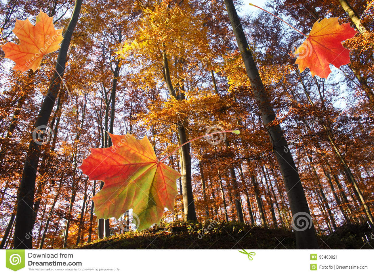 Forest In Autumn And Falling Leaves Stock Image Image Of Falling