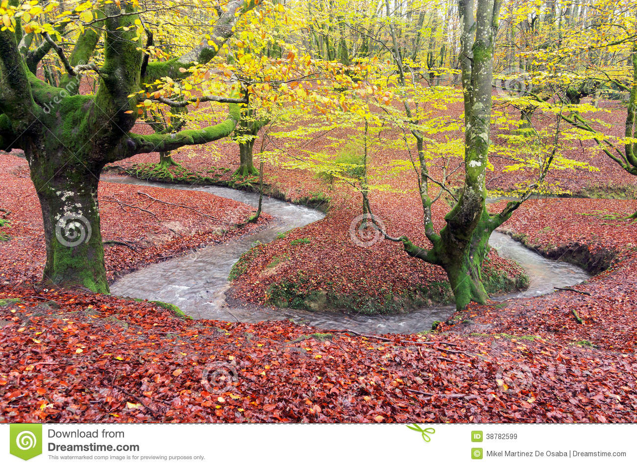 Forest in autumn with stream