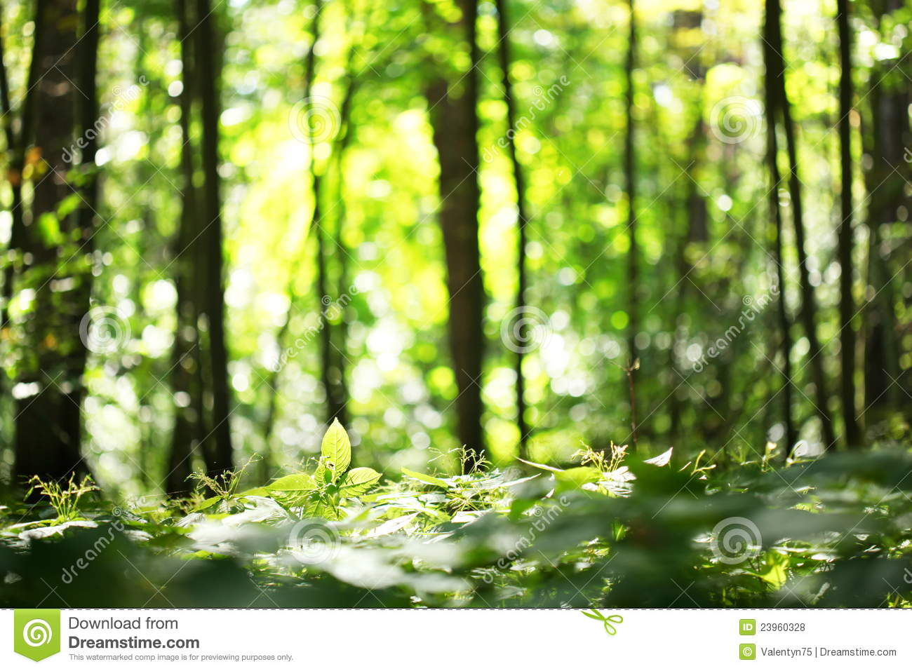 forest blur royalty free stock photos image 23960328 free clipart summer scenes free clipart summer schedule