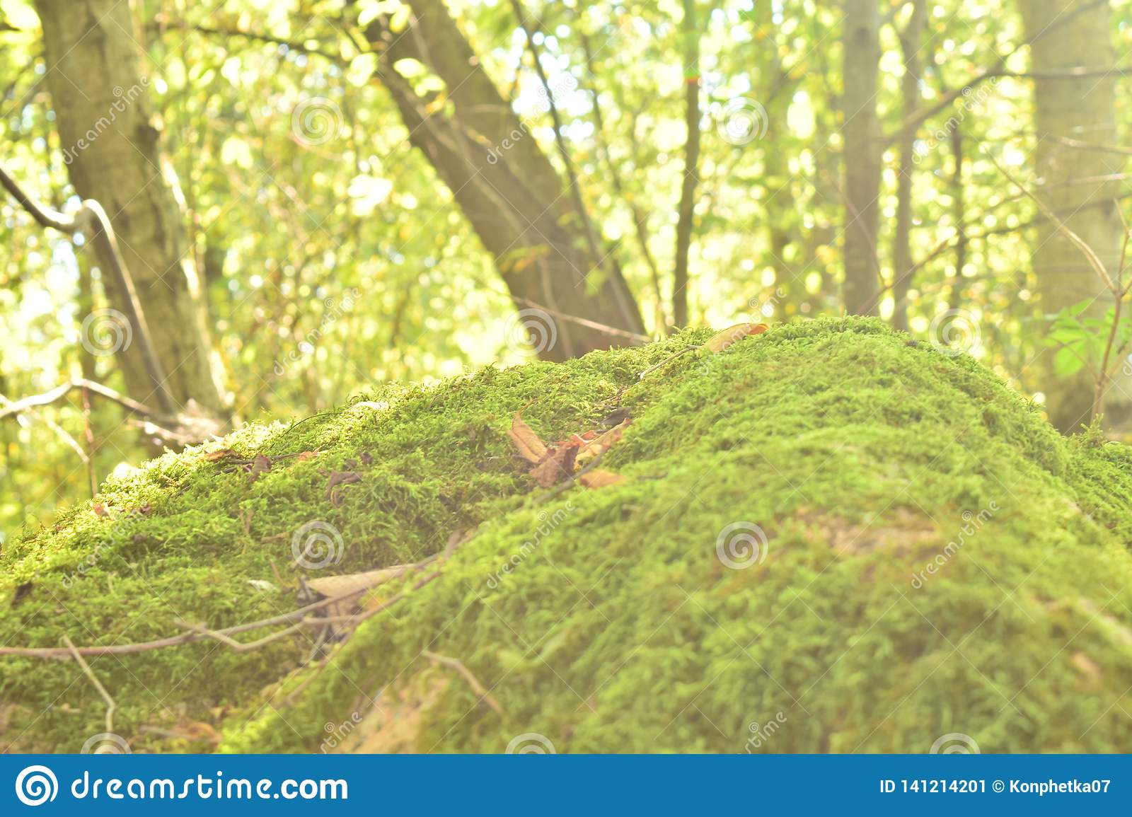 Grassy knoll in the forest