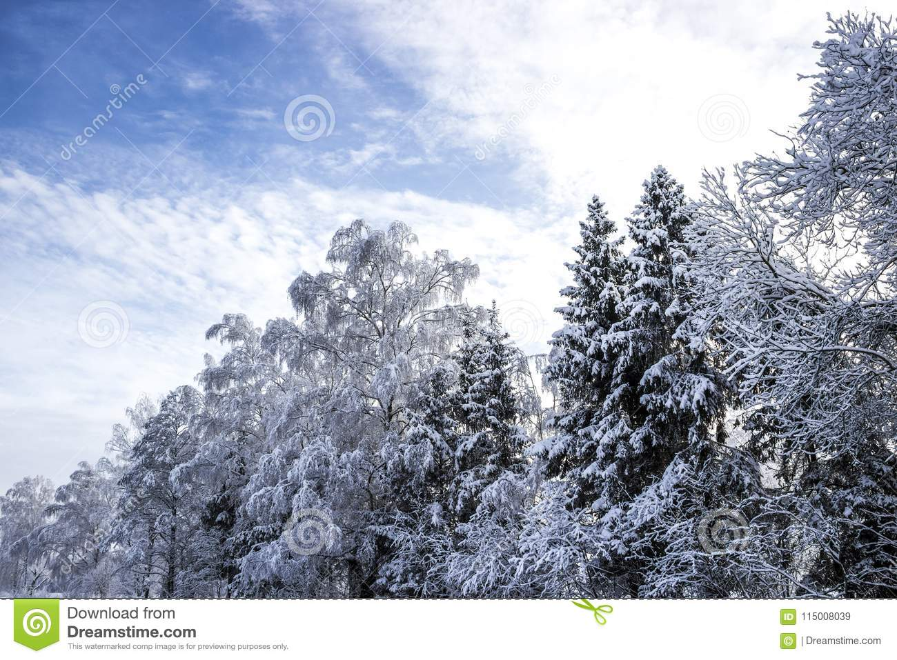 Forest Christmas Trees Birch Snowy Landscape Diagonal Winter Snow Sun Wallpaper Horizontal Background