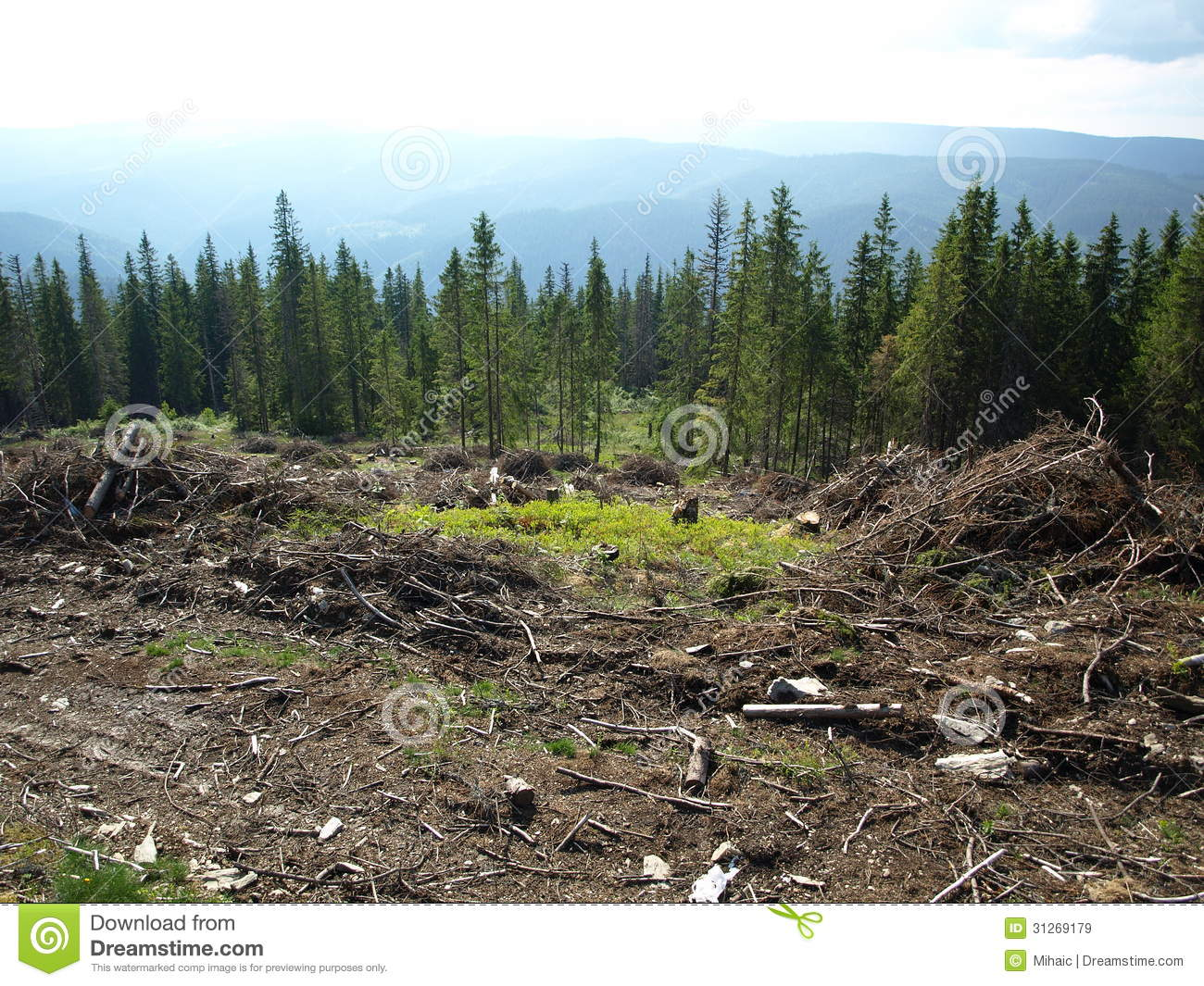how detrimental clear cut logging is affecting the environment There has been a lot of negative press whether the forest is clearcut or partially cut clearcutting can be done without logging companies do not.