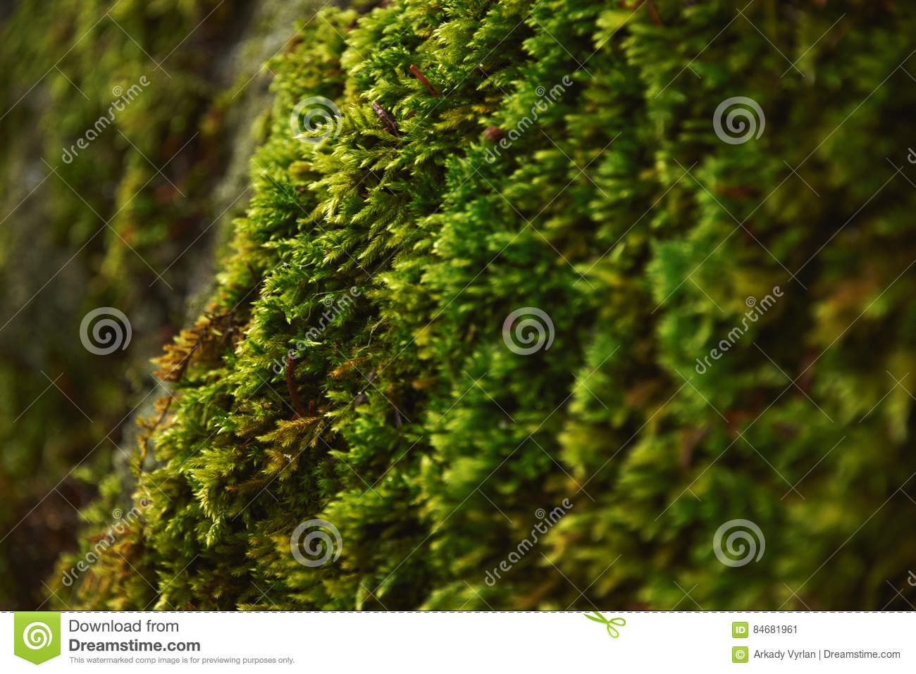 Forest closeup moss and trees