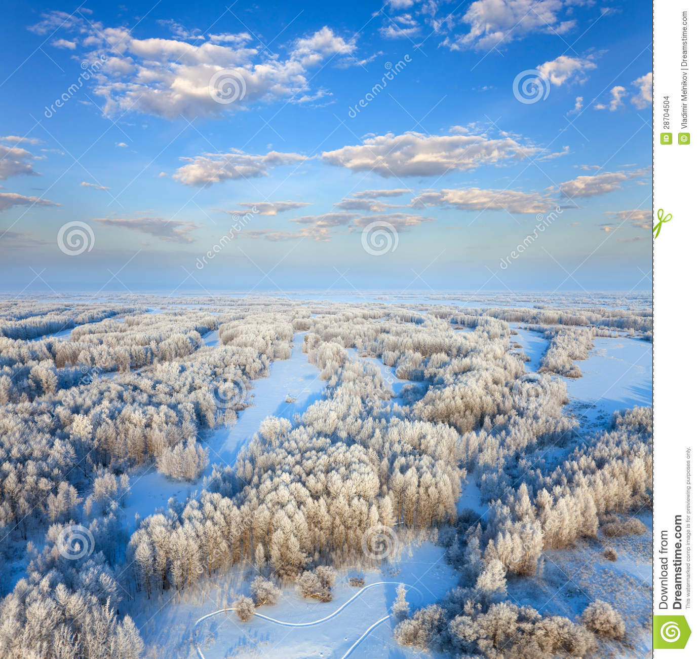 Forest during cold winter day