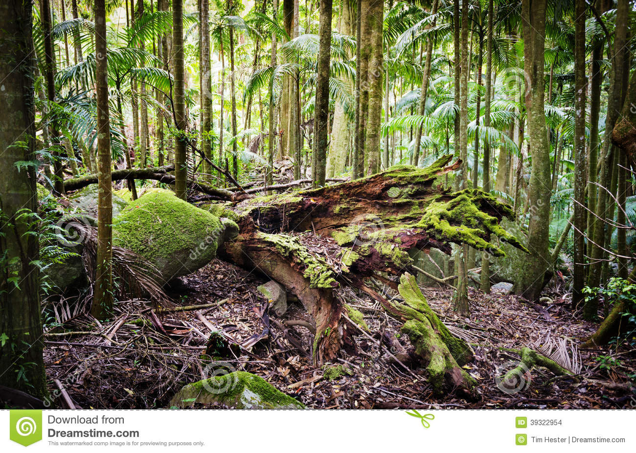 forest conservation For the conservation of forests, this should be checked and an alternative method should be devised similarly, for the development of villages, towns and cities, forest lands have been cleared and this process continues to this day causing loss of forest cover.