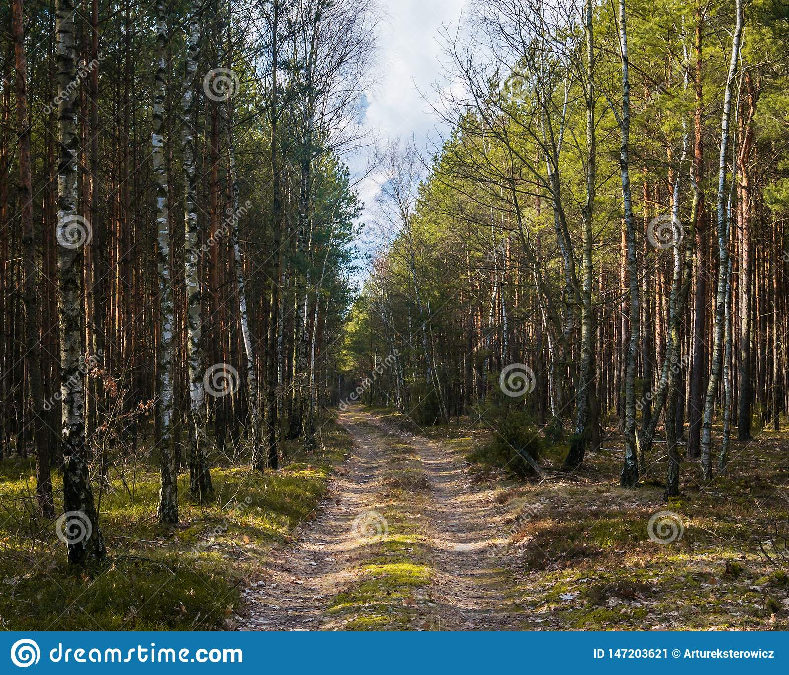 Forest in the countryside in Europe