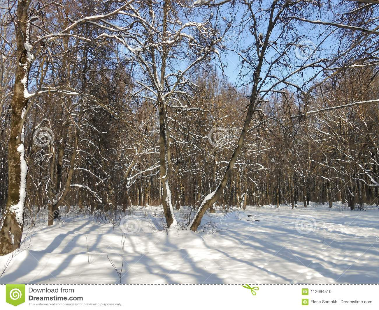 Forest covered with snow.