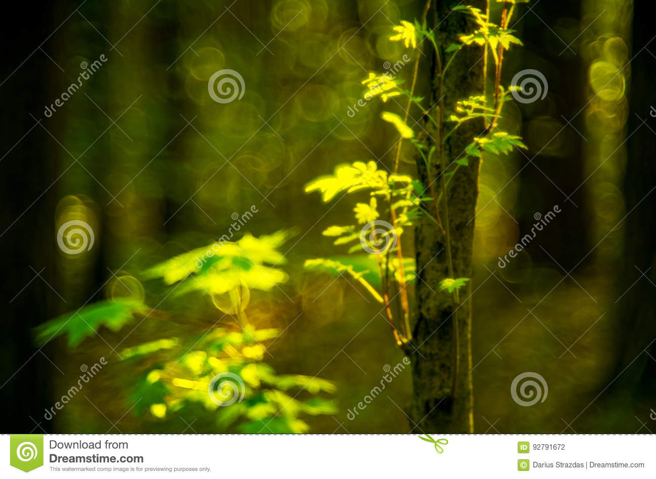 Forest detail background stock photo  Image of special