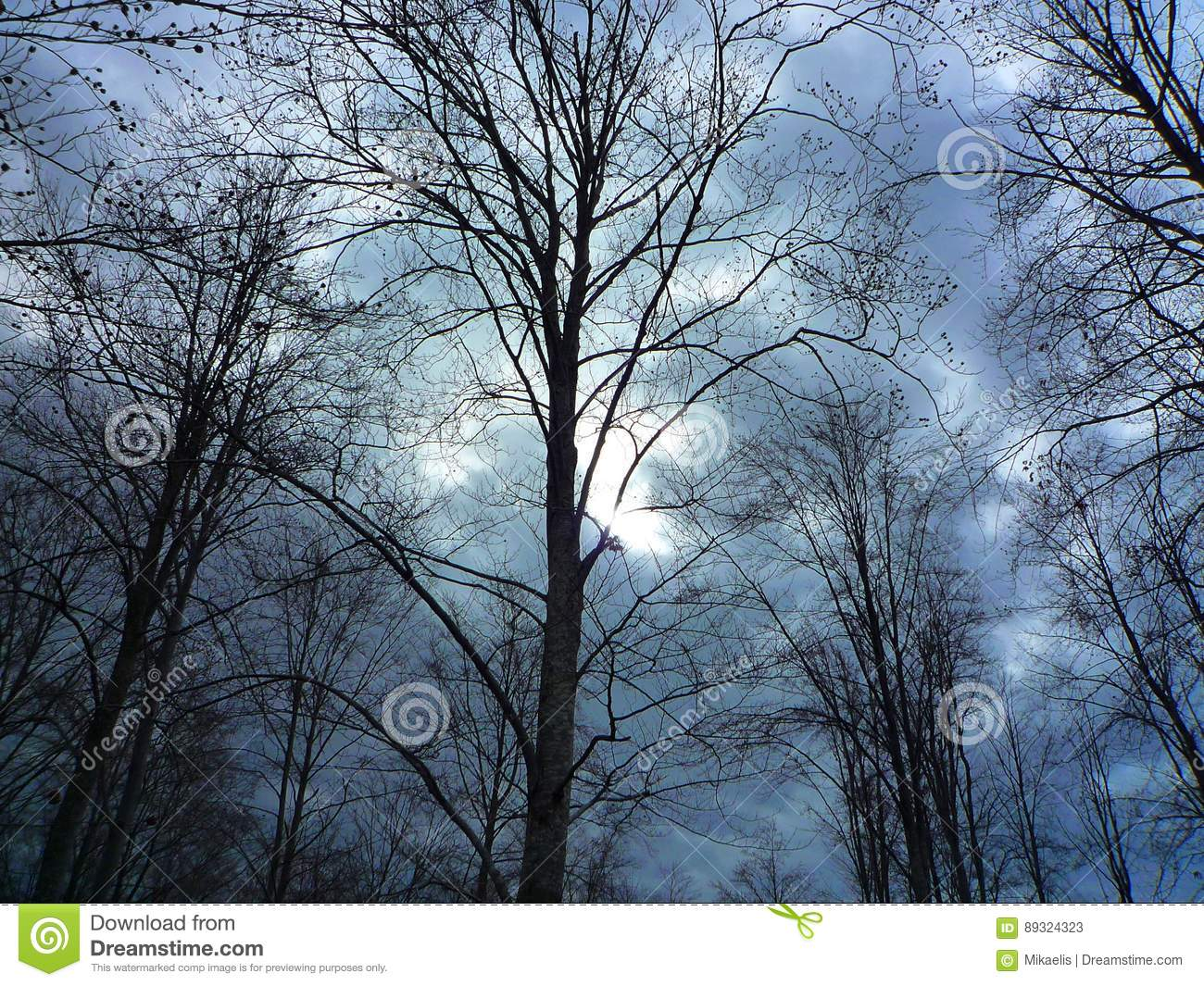 Forest detail with leafless trees in spring on a cloudy evening at sunset