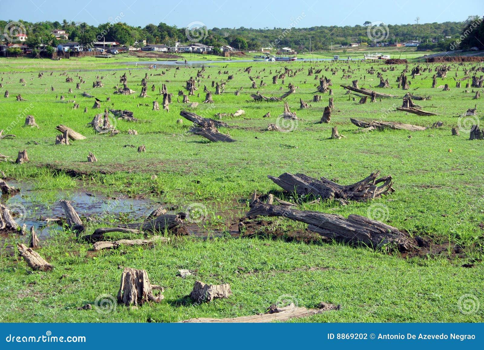 Forest devastated