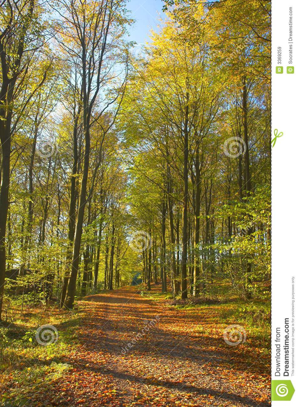 Forest in early autumn