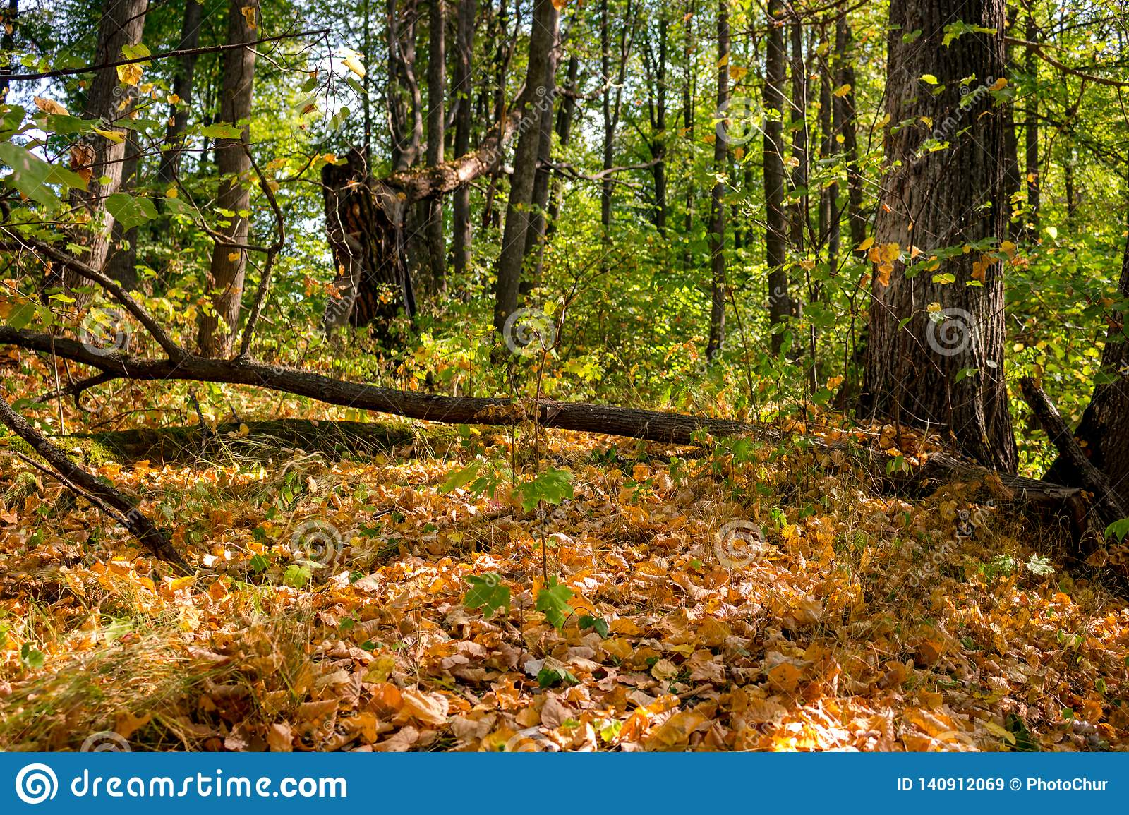 Forest In Early Autumn hermoso