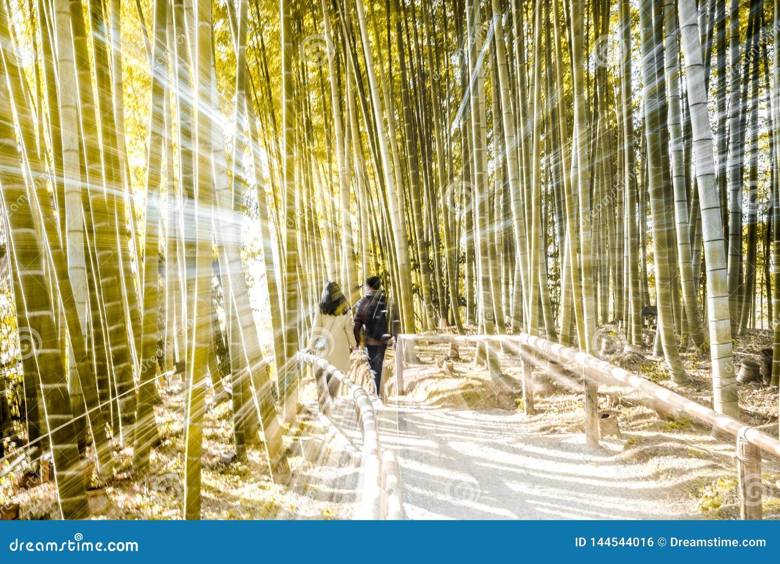 Forest Effect de bambú