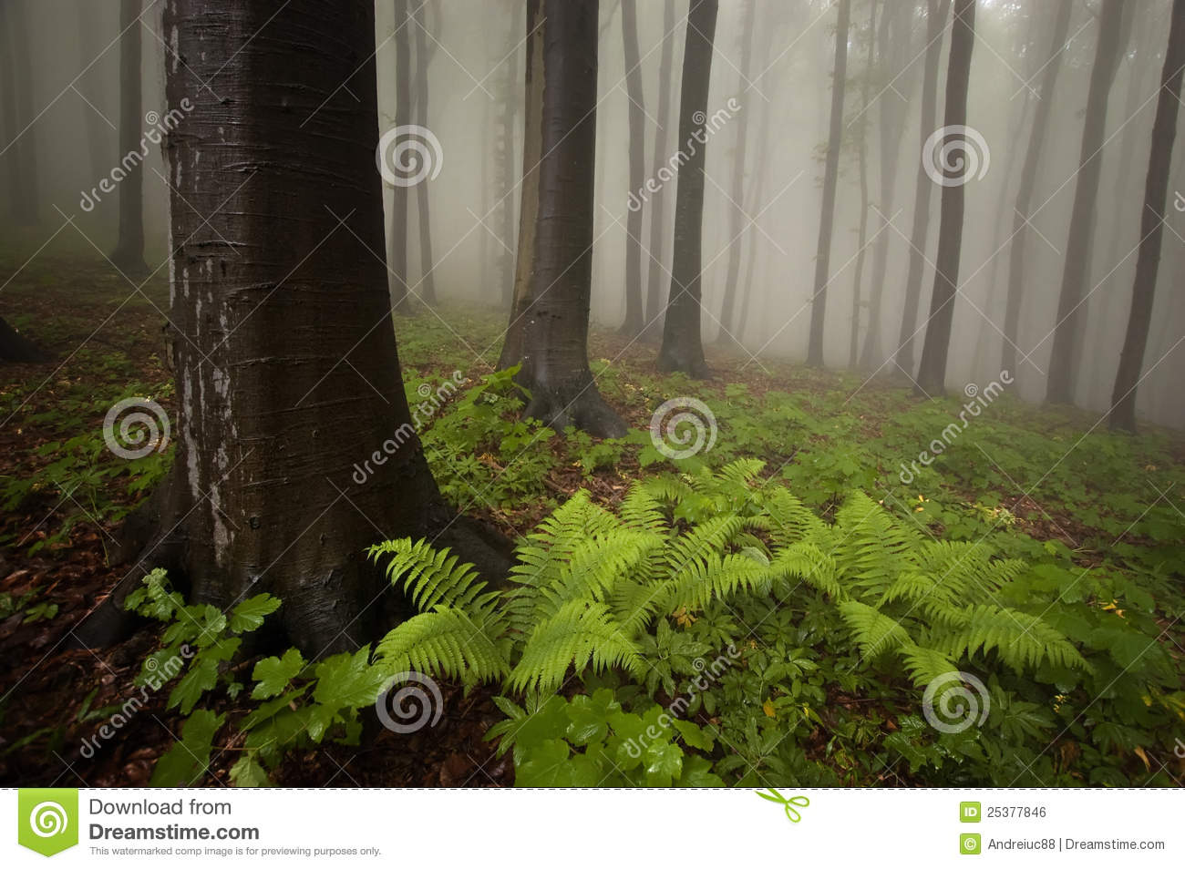 Forest with fern plant and fog