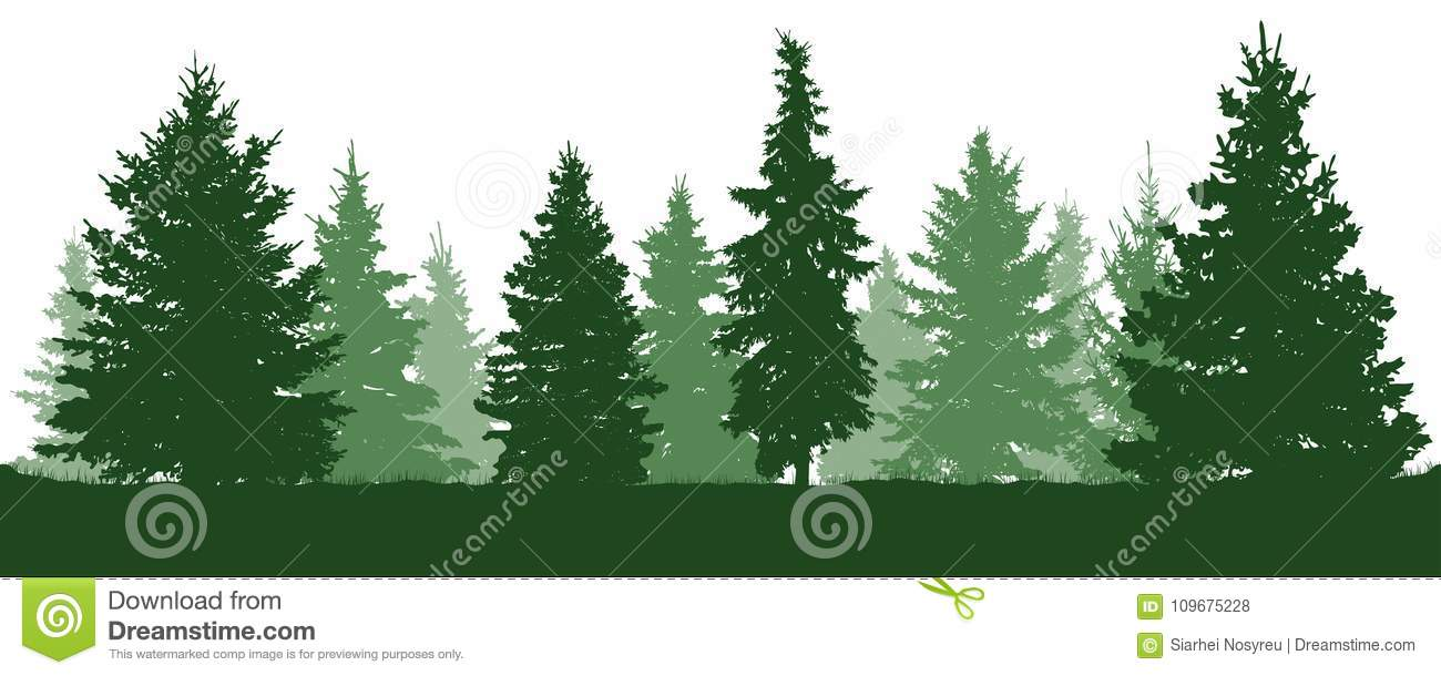Download Forest Fir Trees Silhouette. Coniferous Green Spruce. Vector On White Background. Stock Vector - Illustration of environment, outdoor: 109675228