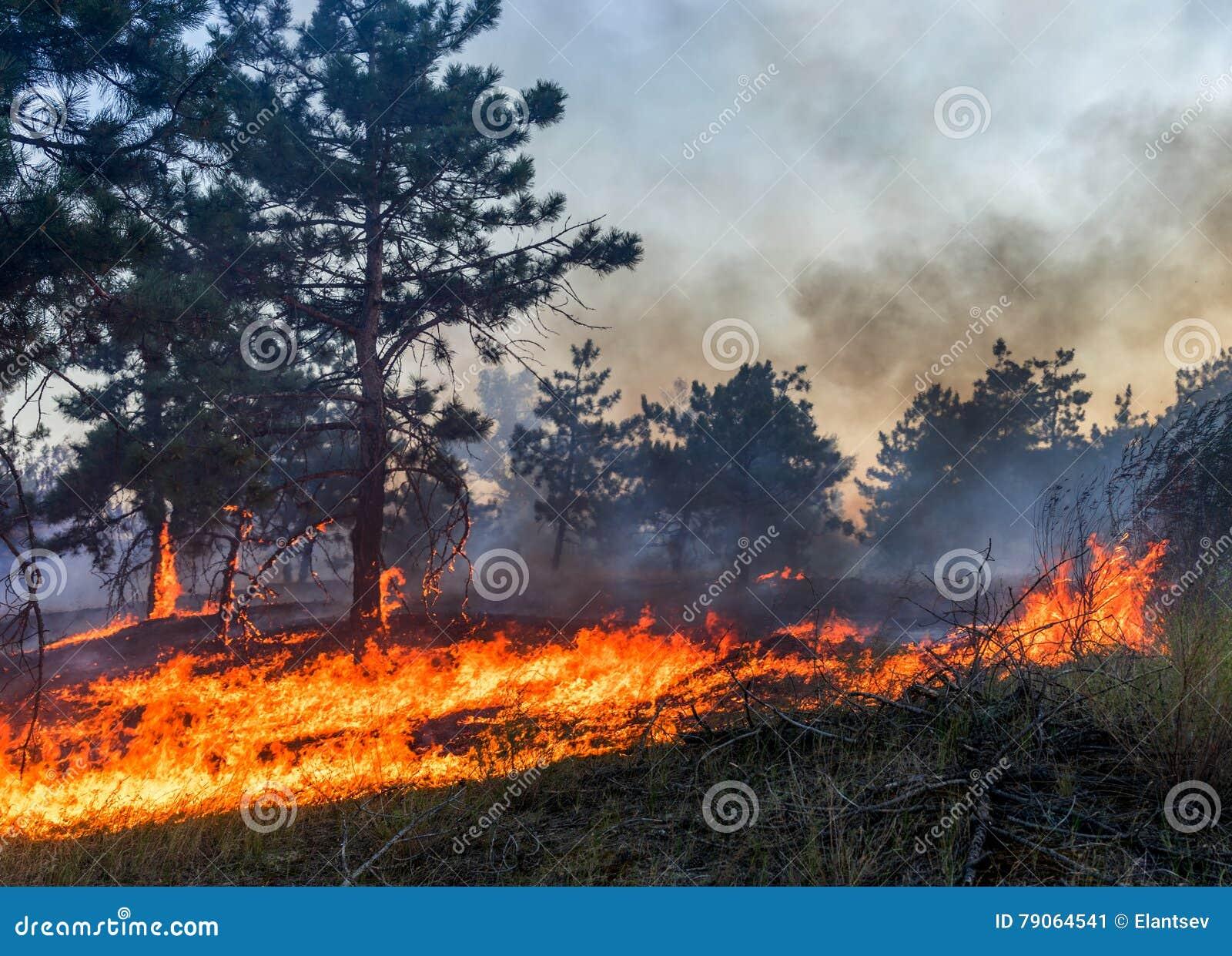 Forest Fire Árboles Quemados Después Del Incendio Fuera De Control ...