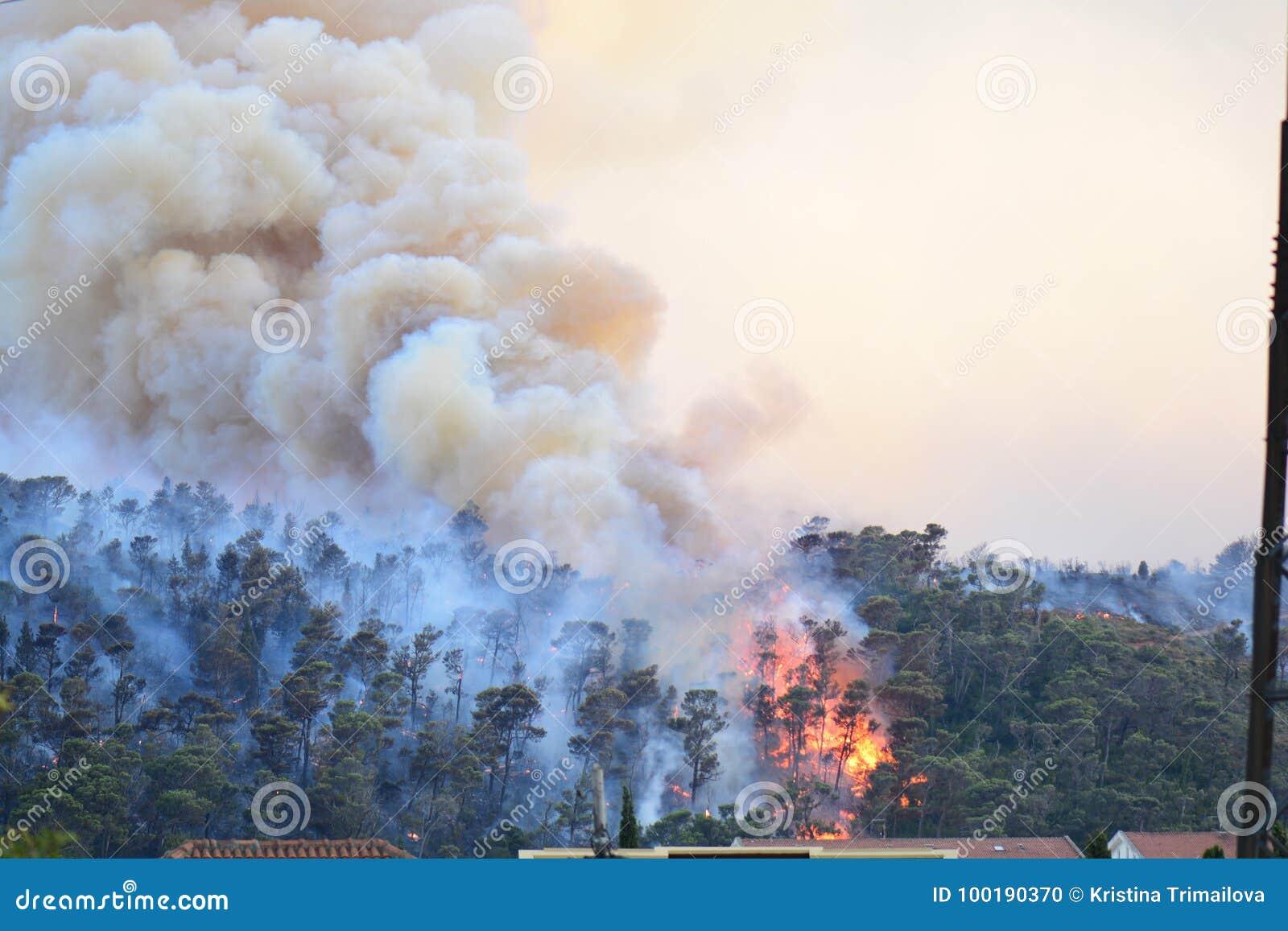Forest Fire Árvores queimadas após o incêndio violento, a poluição e o muito fumo