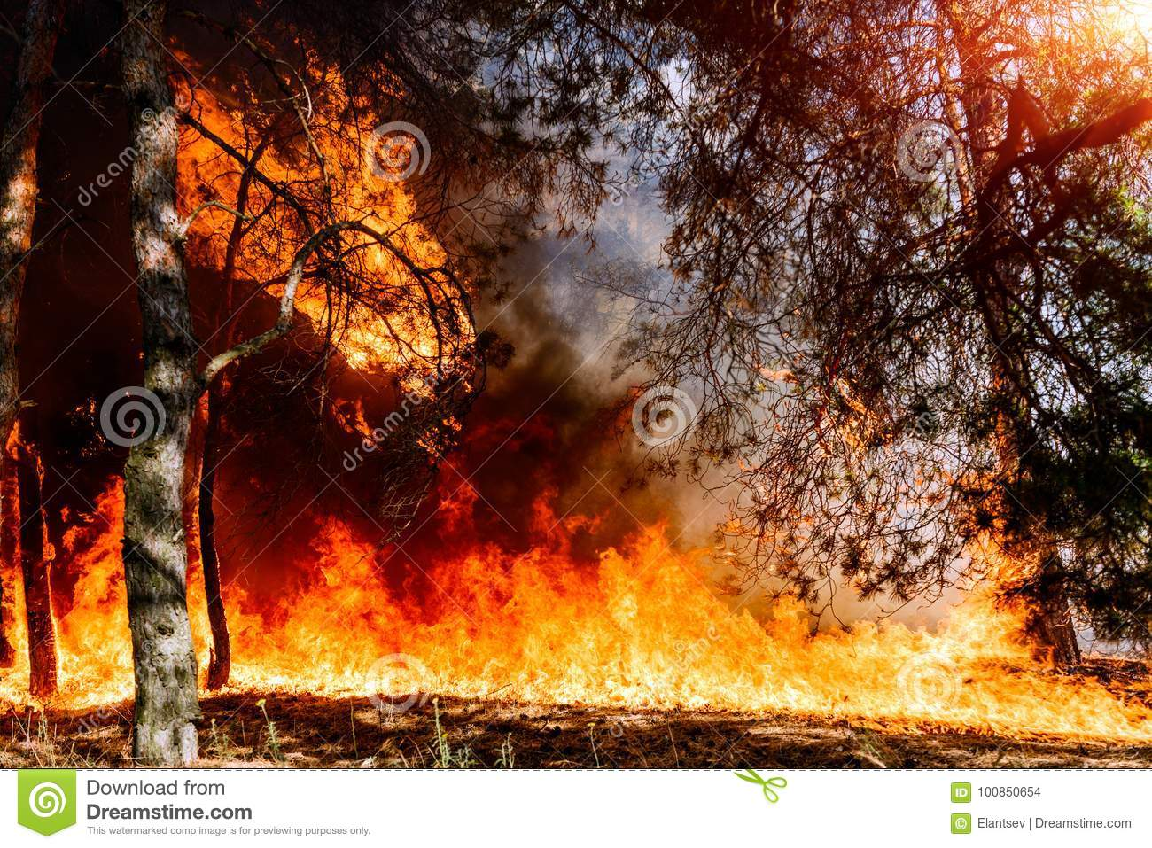 Forest fire. Appropriate to visualize wildfires or prescribed burning.