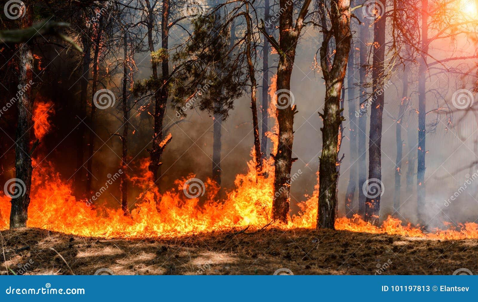 Forest Fire Brända träd efter löpeld, förorening och mycket rök