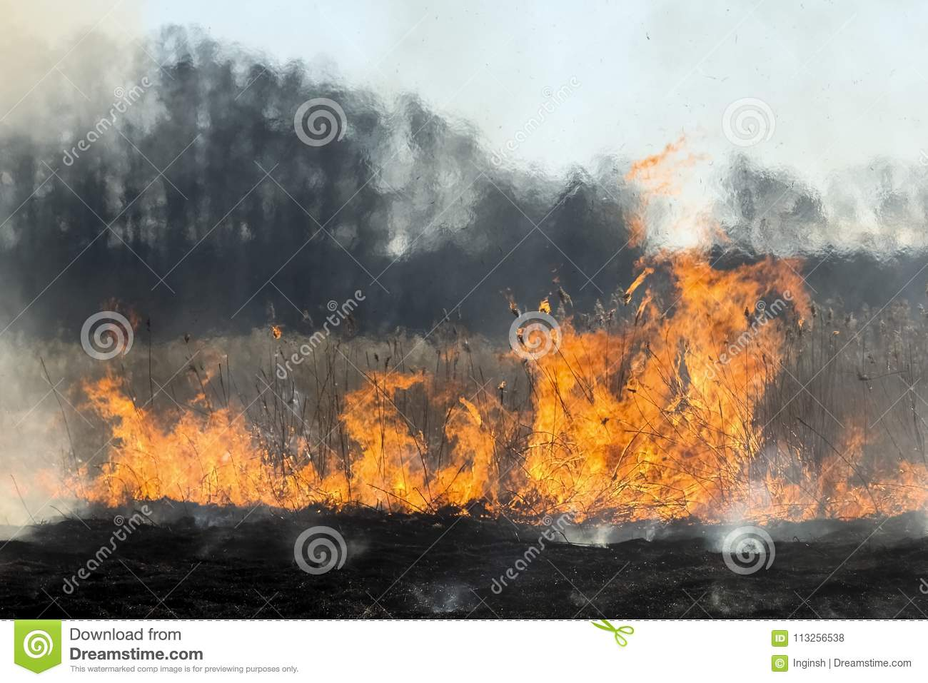 Forest Fire Burning Grass And Small Trees Stock Photo