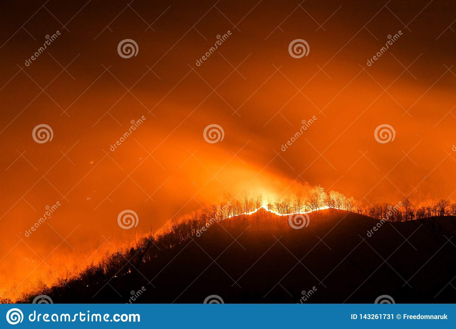 Forest Fire Burning Trees At Night Stock Image Image Of