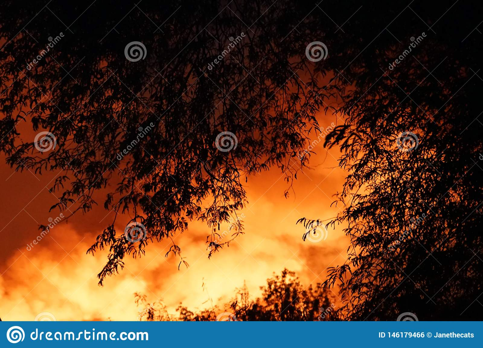 Forest Fire Burning Trees With A Smoke Over The Sky At Night