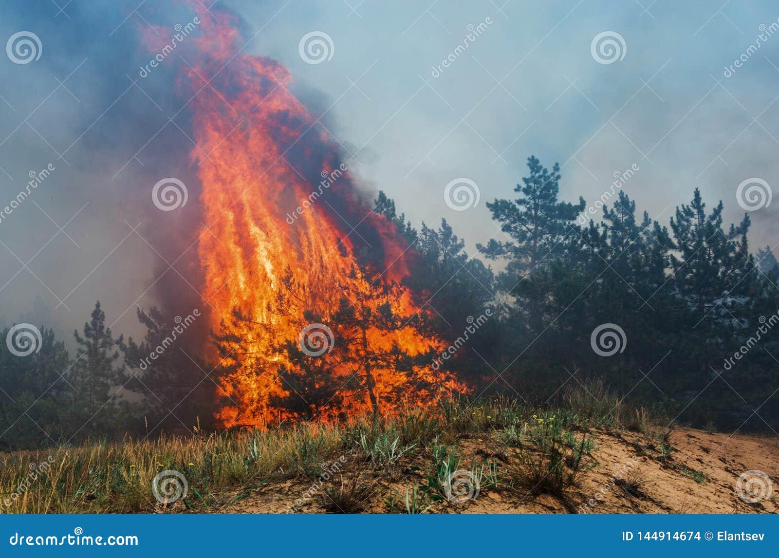Forest Fire de gevallen boom wordt gebrand aan de grond heel wat rook wanneer vildfire