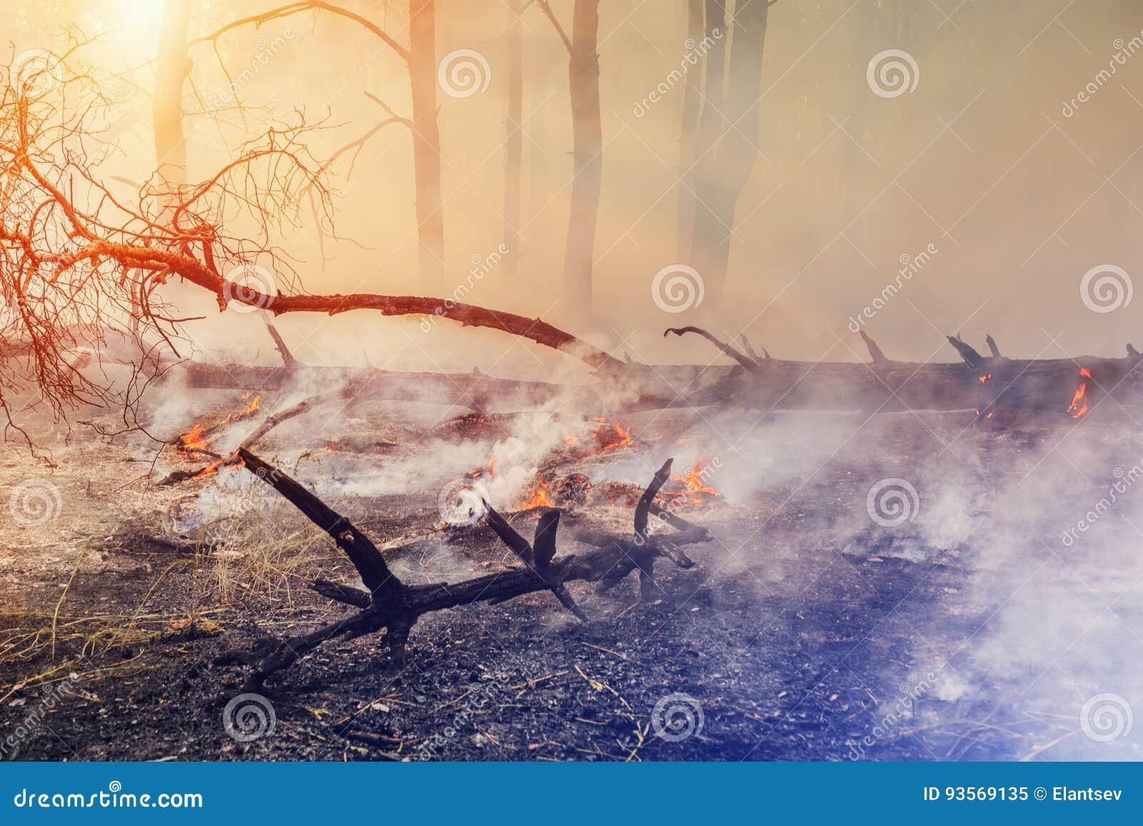 Forest Fire l arbre tombé est brûlé à la terre beaucoup de fumée quand le feu de forêt