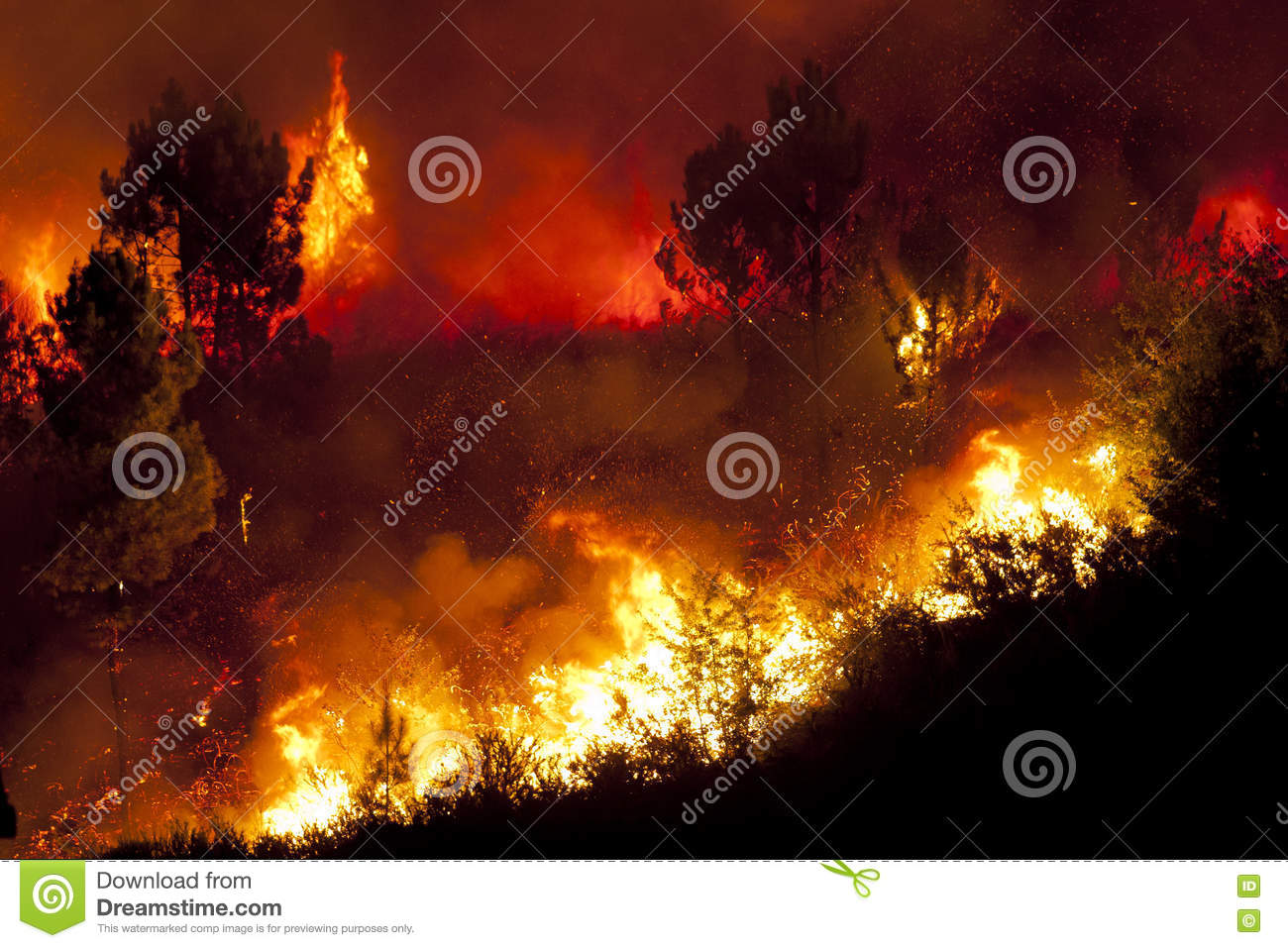 Download Forest Fire stock photo. Image of natural, burnt, tree - 79931964