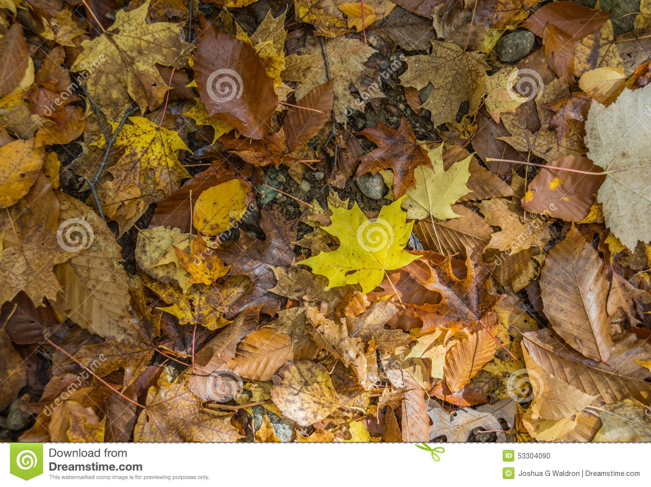 Forest Floor Collage Of Autumn sidor