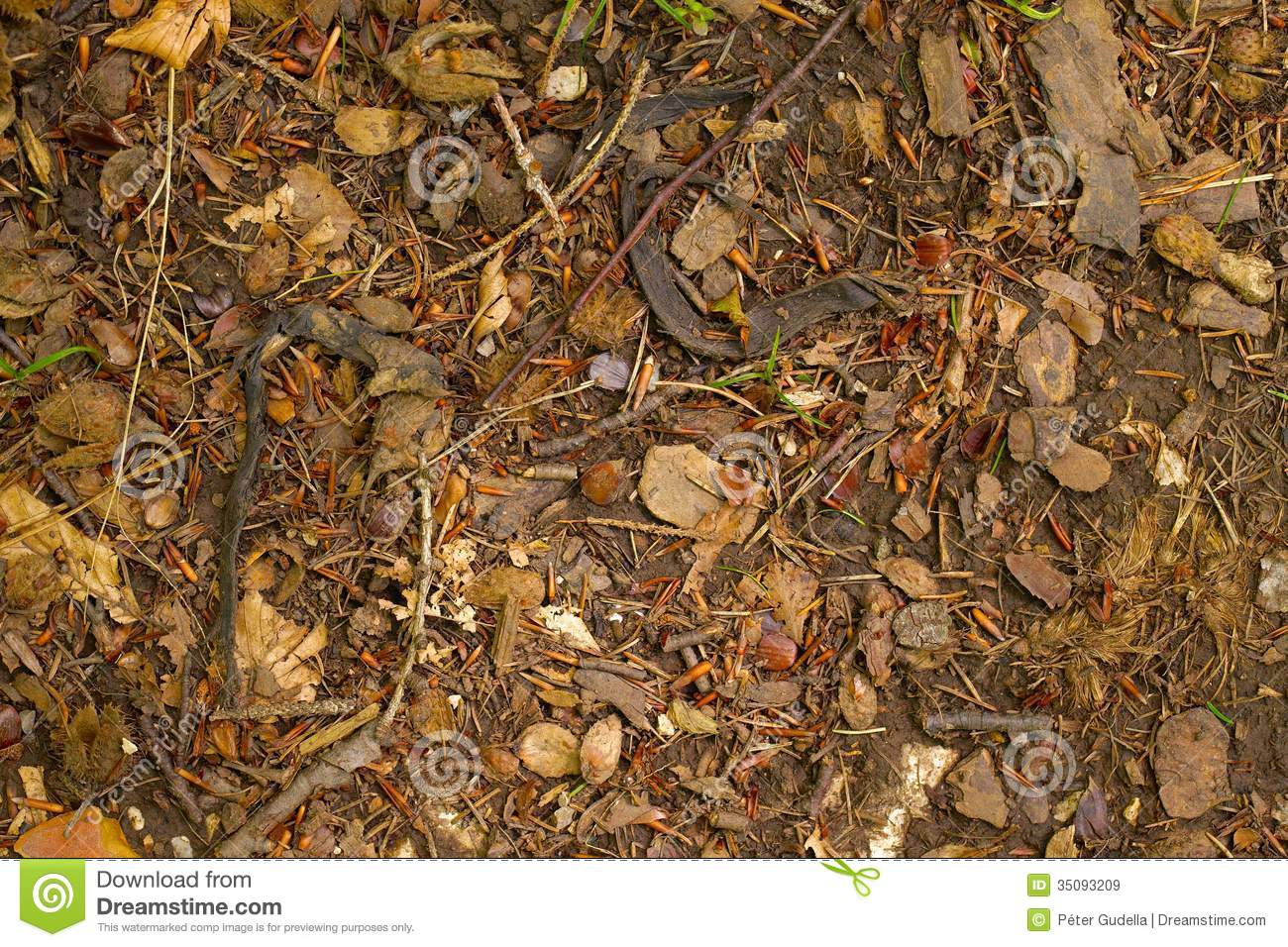 Forest Floor Royalty Free Stock Images Image 35093209