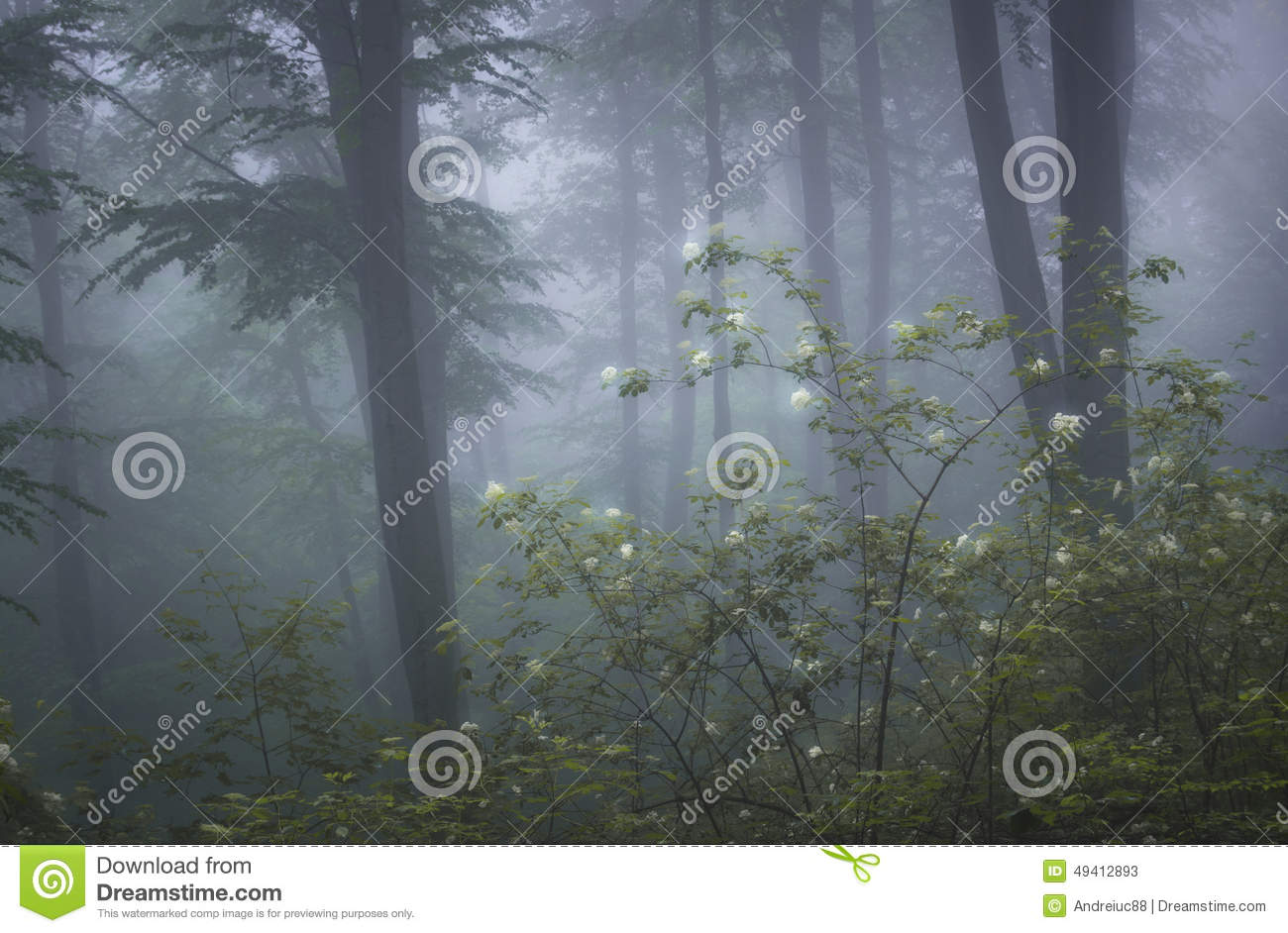 Forest with fog and flowers in bloom